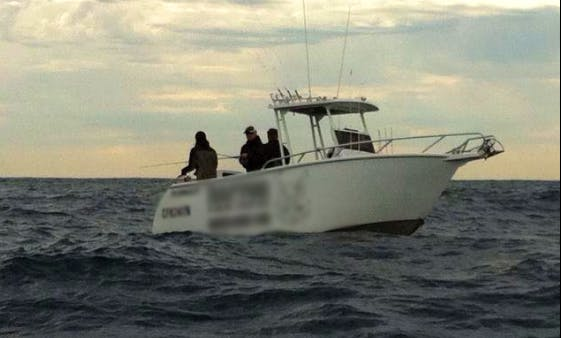 Harbour and Offshore Fishing Charters in Cammeray