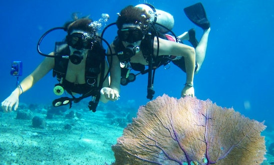 Book A Memorable Diving Trips In Red Sea Governate!