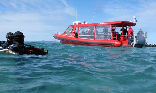 Enjoy Diving Trips In Portsea, Victoria, Australia
