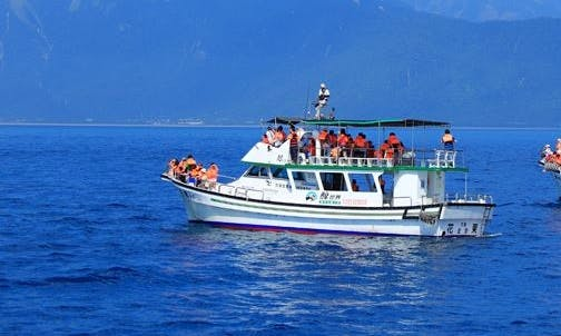 Unforgettable Dolphin Tour in Hualien City, Taiwan