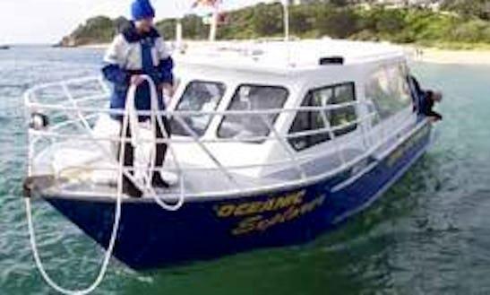 Enjoy Diving Courses In Braeside, Australia