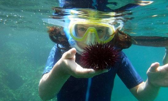 Enjoy Snorkeling Tours In Sant'angelo, Campania