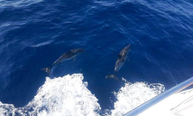 Private Dolphin Tour in Marbella
