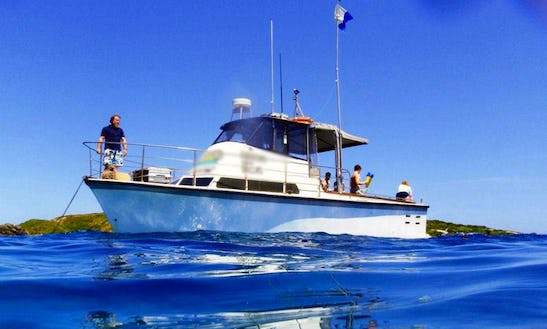 'dallas' Boat Wildlife Tours, Diving & Fishing In Narooma