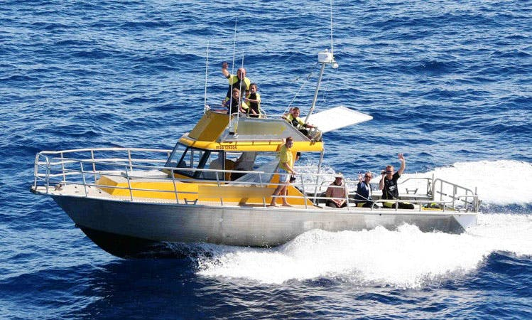 33' Fishing Charter in Whakatane, New Zealand