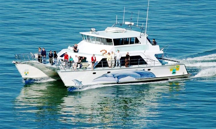 65' Dolphin Tour in Auckland, New Zealand