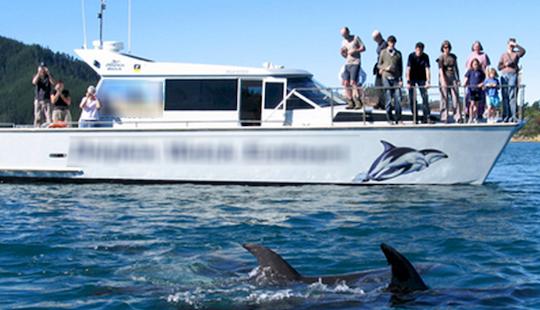 Delphinus 42' Cruising Catamaran Charter In Marlborough Sounds