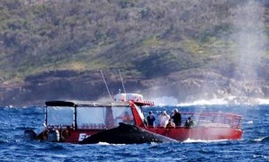 Passenger Boat Charter In Nelson Bay, Australia