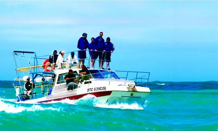 Shark Cage Diving Boat In Gansbaai