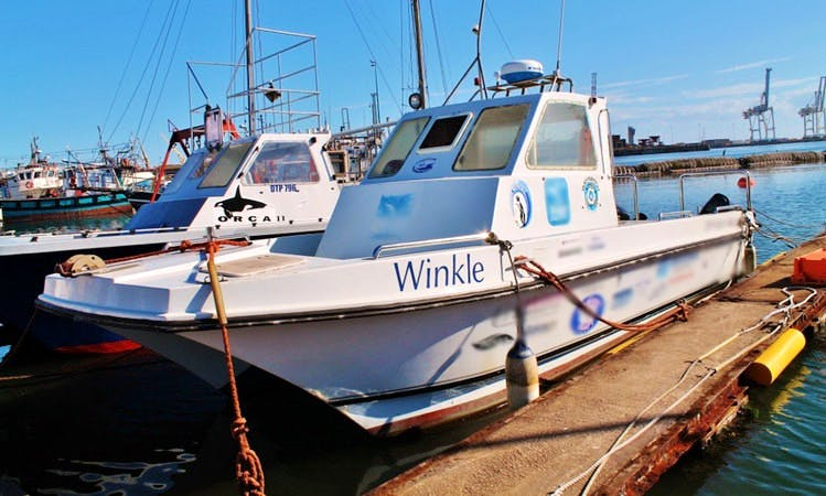 Charter on 28' Power Catamaran from Port Elizabeth, South Africa