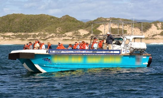 Passenger Boat Whale Watching Trips In Plettenberg Bay, South Africa