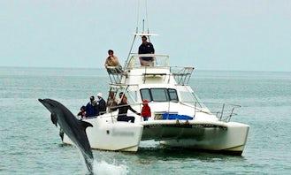 Catamaran Dolphin Cruises and Charter in Walvis Bay