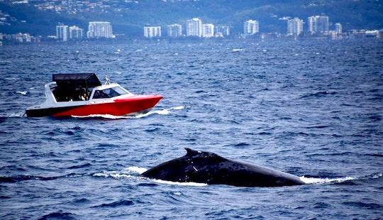 Enjoy Whale Watching In Mooloolaba, Australia