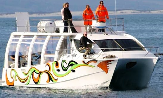 49' Whale Watching Trips In Hermanus, South Africa