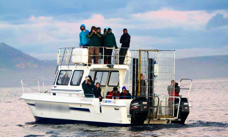 Great White Shark Diving & Viewing Tours In Cape Town