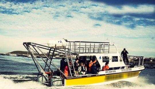36' Dive Catamaran In Kleinbaai