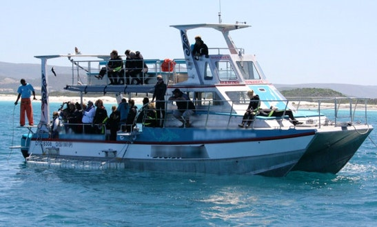 46' Shark Cage Diving Boat In South Africa