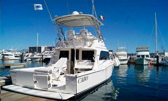 Fishing Charter On 35ft Cabo Express Yacht In Cabo San Lucas, Mexico
