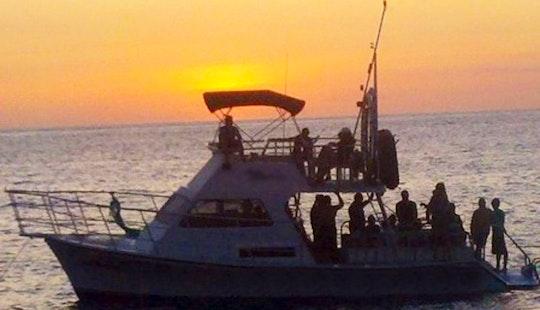 Manta Ray Night Dive & Snorkel Eco Adventure Tour In North Kona