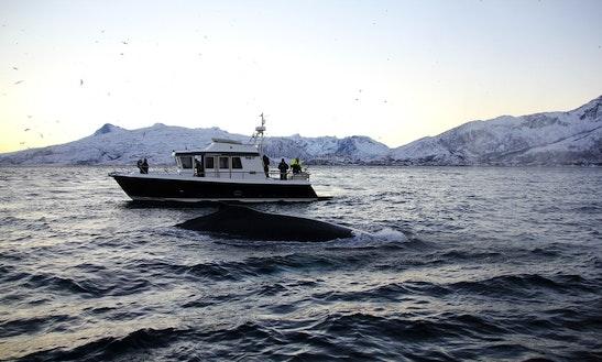 Charter A Motor Yacht In Tromsø, Norway