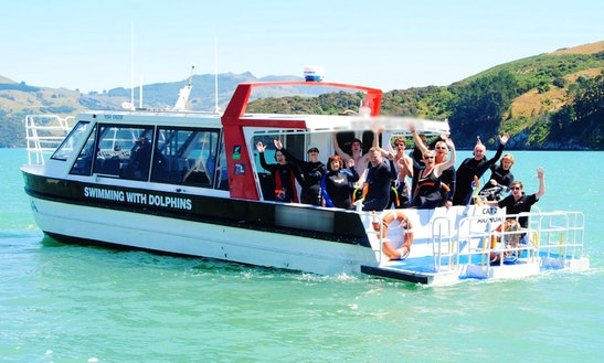 Captained Charter On 'cat 2' Boat Dolphins In Akaroa