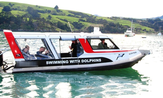 Captained Charter On 'black Pearl' Boat Dolphins In Akaroa