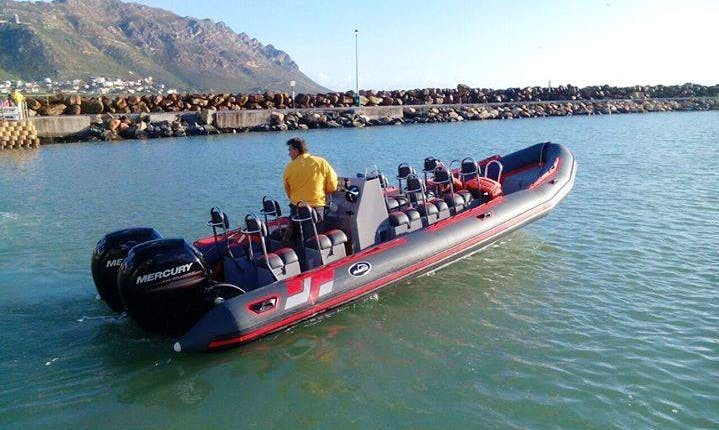 Adventure Dive Boat Rides in Cape Town, South Africa