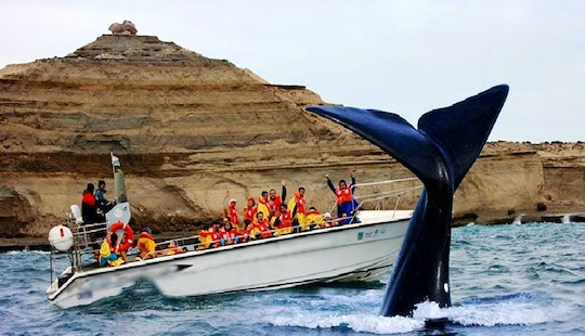 Whale Watching Excursion In Puerto Madryn