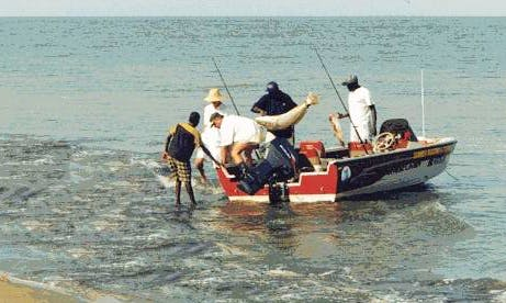 Enjoy Fishing in Bakau, Gambia on 17' Fish Hawk Jon Boat