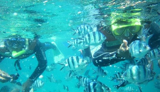 Enjoy Snorkeling In Denpasar Selatan, Bali