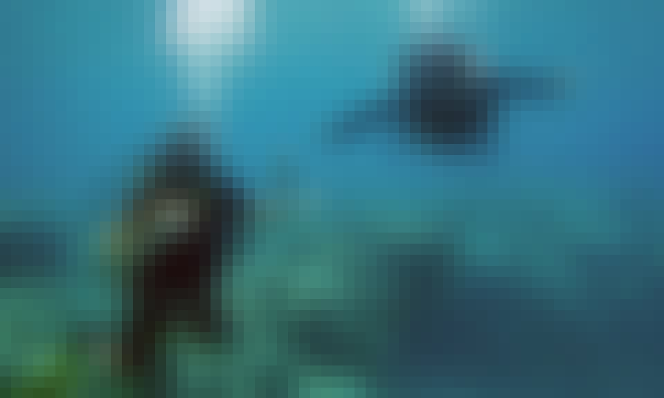 Budget Liveaboard Diving - Apo Reef, Coron Wrecks & Dugongs