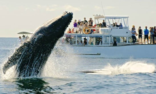 Whale Watching In The Gold Coast And Brisbane, Australia