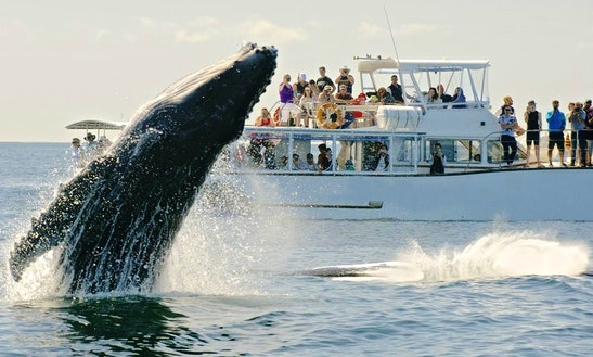 Whale Watching In The Gold Coast And Brisbane