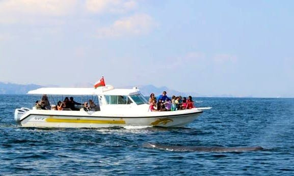Enjoy Dolphin Watching Tours in Muscat, Oman