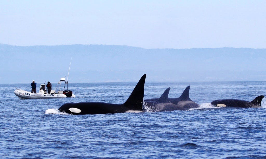 Ocean Eco Tour and Whale Watching on a RIB in Monterey, California