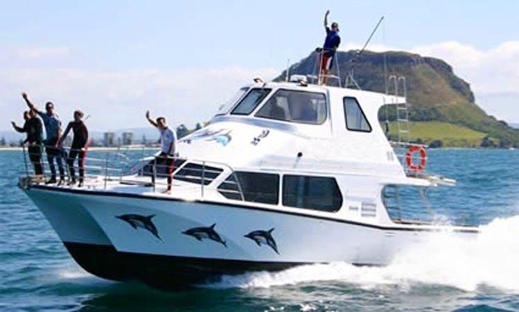 "50' Power Catamaran ""Guardian"" Wild dolphin Swimming trips in Tauranga, New Zealand"