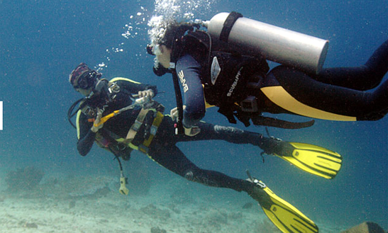 Enjoy Diving Courses And Trips In Gerokgak, Bali