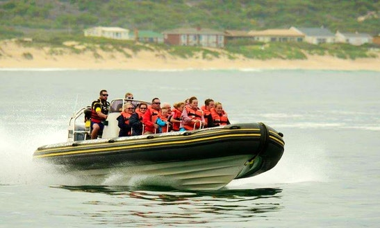 Charter A 12 Person Rigid Inflatable Boat In Mossel Bay, South Africa