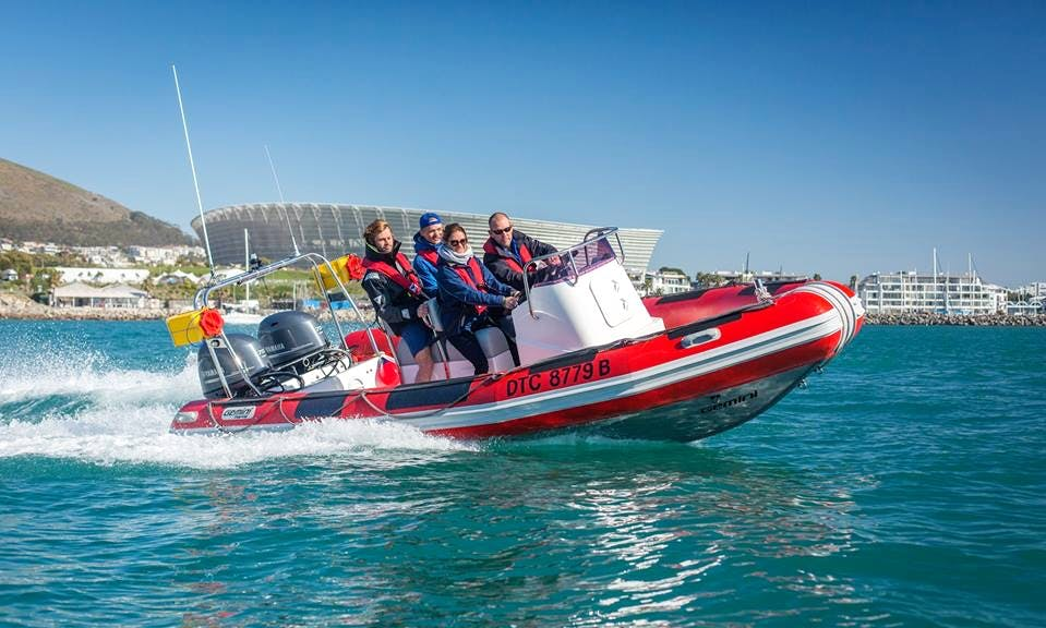 Charter a Rigid Inflatable Boat in Cape Town, South Africa