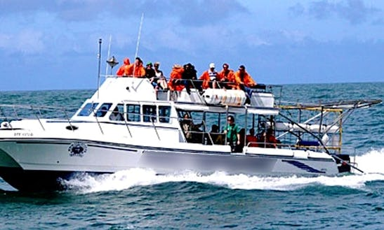 Enjoy Diving Trips In Cape Town, South Africa
