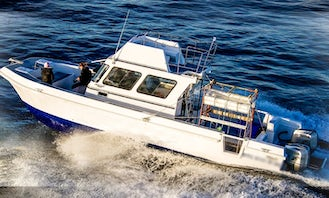 Shark Cage Diving Tours In Cape Town - including boat based.