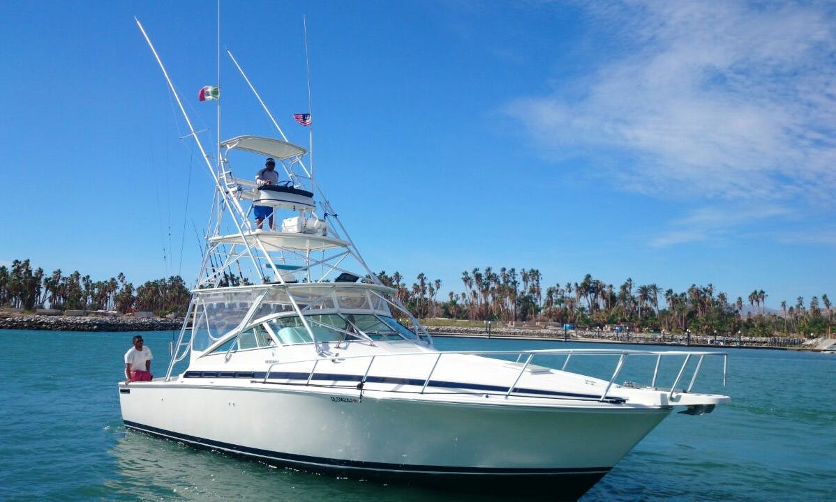 Fishing Charter On 36ft Bertram Yacht In Baja California Sur, Mexico