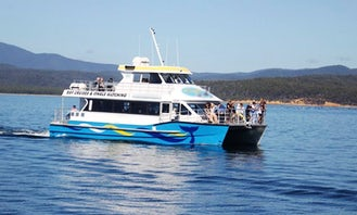 Whale Watching Tour in Eden