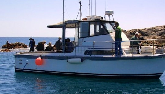 Guided Diving/snorkeling Trips In Narooma