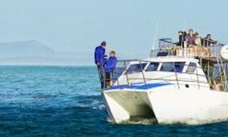 Shark cage diving in Van Dyks Bay