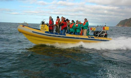Rib Diving Charter In Cape Town, South Africa