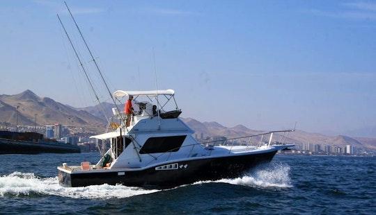 Enjoy Fishing In Antofagasta, Chile On 39' Misty Sport Fisherman