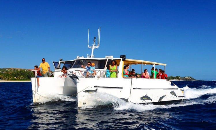 'Dolphin Safari' Catamaran Cruise in Saint-Gilles les Bains