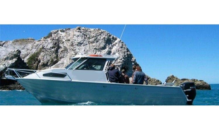 Enjoy 40' Sport Fisherman Fishing Charters and Eco Tours in Kaikoura, New Zealand