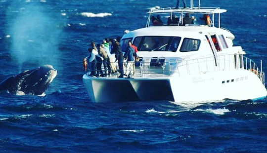 Boat Based Whale Watching In Hermanus, Western Cape, South Africa (70 Seater Motorised Catamaran)